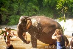 Elephants, Modulkiri
