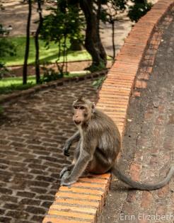 Monkey, Wat Phnom